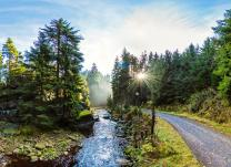 Kremserfahrt im Schwarzwassertal