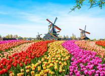 Zur Tulpenblüte nach Holland mit Amsterdam