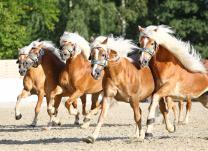 Das Zentrum der Pferdezucht