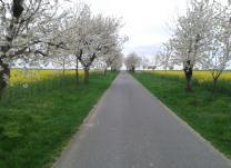Zur Baumblüte ins Alte Land