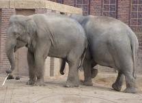 Leipzig mit Freizeit - Zoo oder Innenstadt